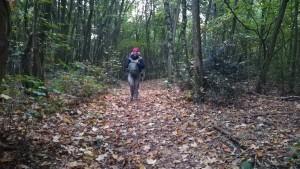 Jenn gaudint d'un luxe de camí a través del bosc