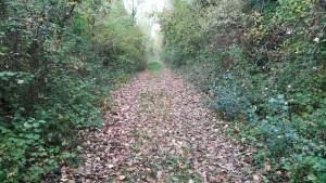Repetim, com ens agrada caminar per llocs així!