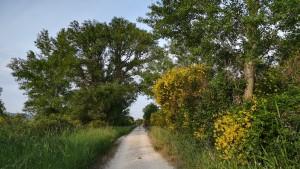 Un bon i bonic camí al costat del riu Roine