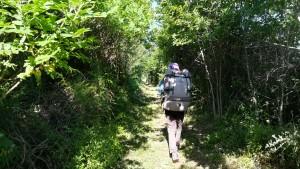 Entre els pobles de s. Aunes i Castelnau-le-Lez, trobem un petit, petit i llarg camí que ens permet avançar cap a l'oest gaudint de cada passa en plena natura i en silenci