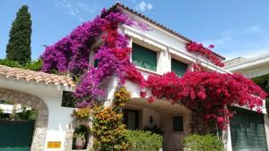 Casa florejada