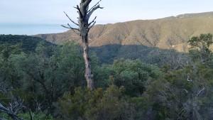 Boscs afortunadament ben atapeïts d'arbres i d'ocells