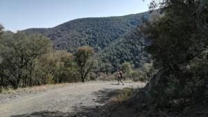 Caminem a vegades per pistes forestals en silenci i envoltats d'arbres, boscs i ocells