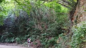 El bosc, preciós, atapeït i font de vida