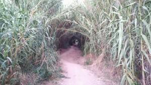Una cucada de túnel / camí per arribar a la platja